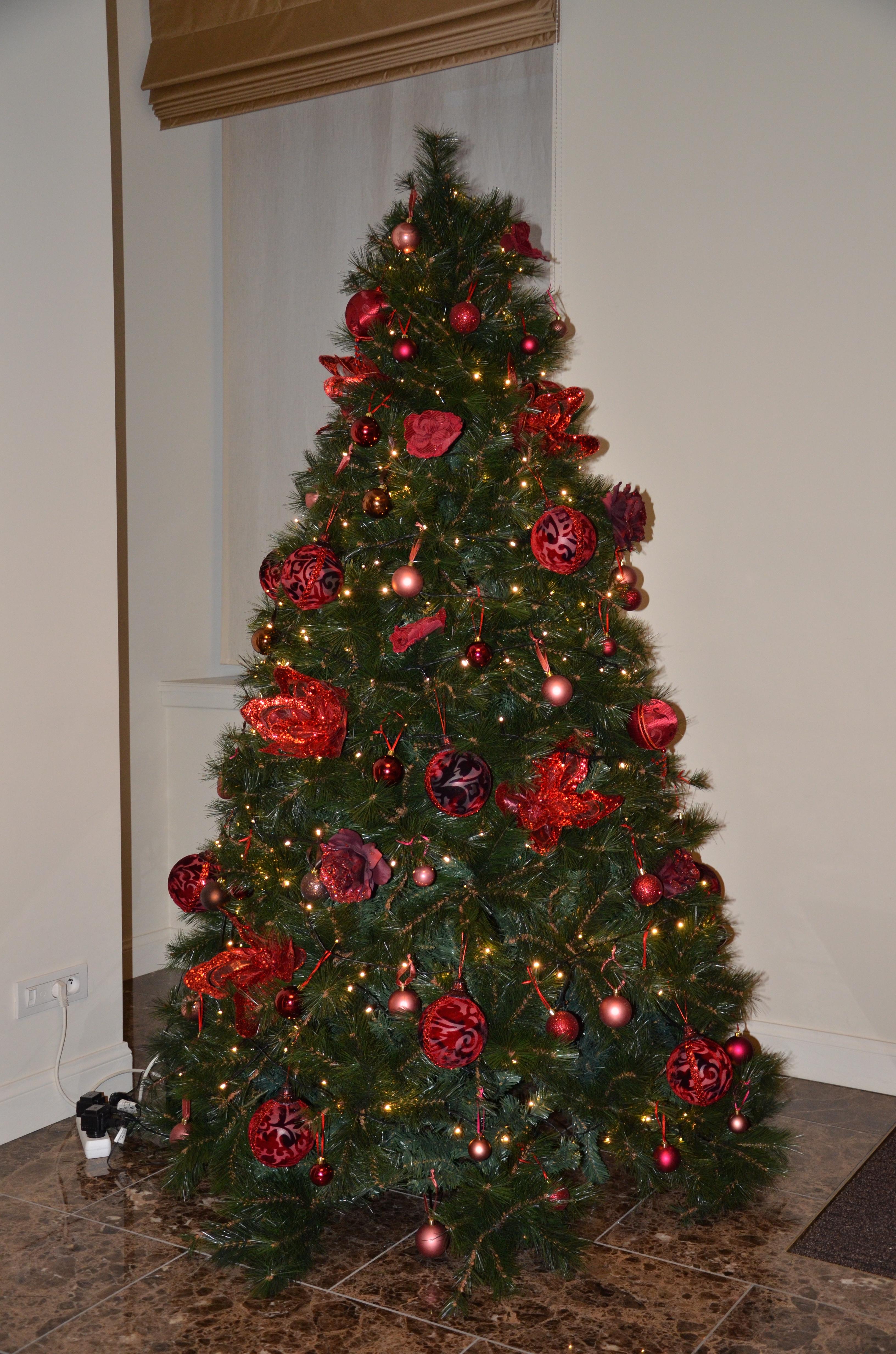 Verhuur Van Kerstbomen