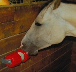Horse treats - Equine snacks and accessories!