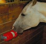Paardensnacks en paardensnoepjes waar uw paard dol op is!!