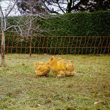 Nets for small animals, poultry and sheep are also part of our range. Make your choice here!