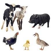 Alles voor boerderijdieren!