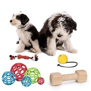 Professional dog sport gear