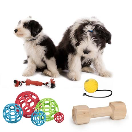 Dog toys - toys for dogs