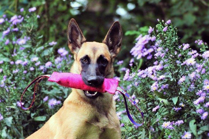 Bijtworst nylcot zacht roze