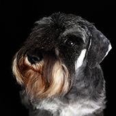 Natuurlijke voedingssupplementen voor honden en hun algemene gezondheid en conditie