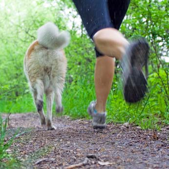 Additional supplements for muscle gain and endurance in dogs