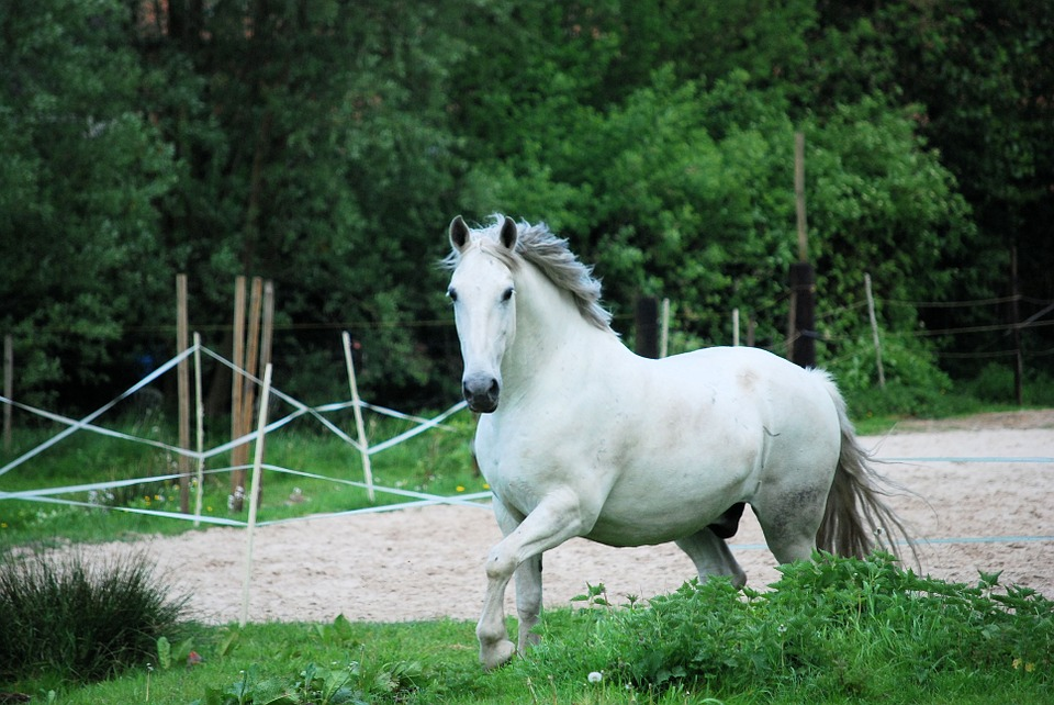 Nutritional supplement for coat horses
