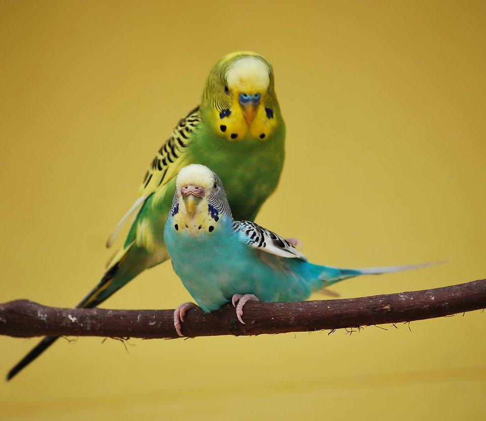 Allerlei producten voor vogels van kanarie of parkiet tot papegaaien