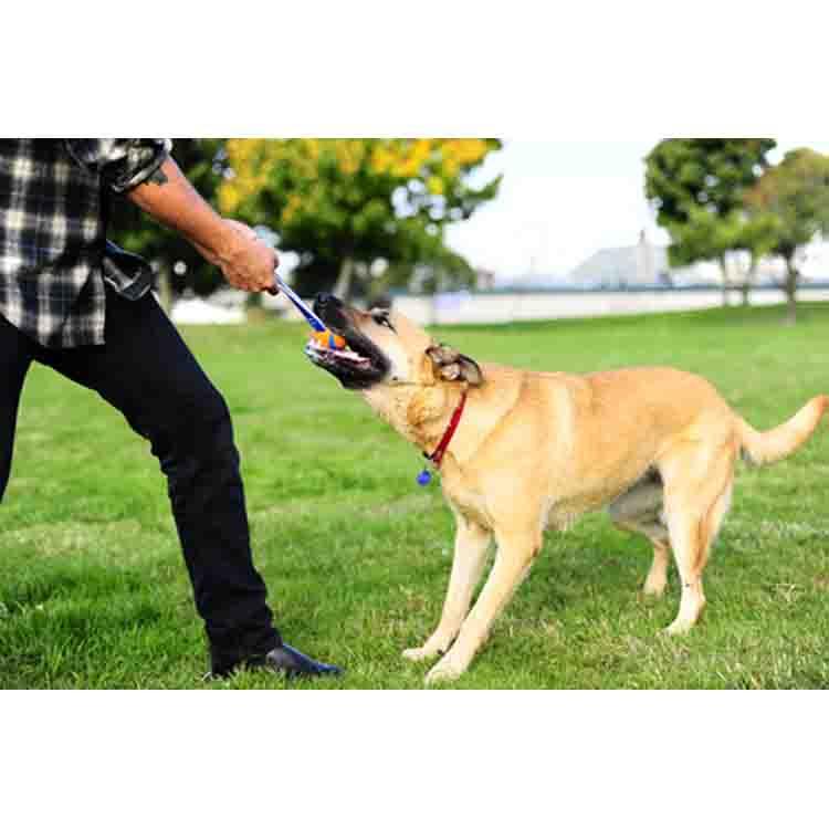 Gedragstherapie voor honden - Hondengedragstherapie