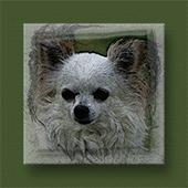 Supplement voor pigmentverlies of pigmentvlekken bij honden