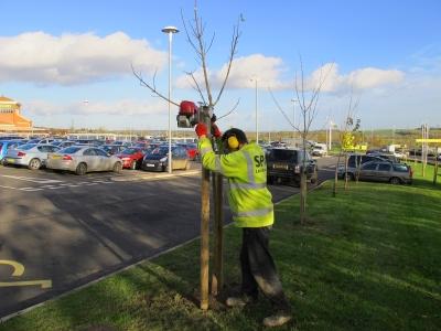 post driver_tree stake