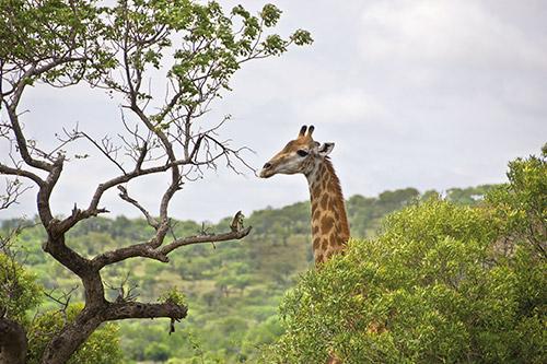 Het Kruger Park