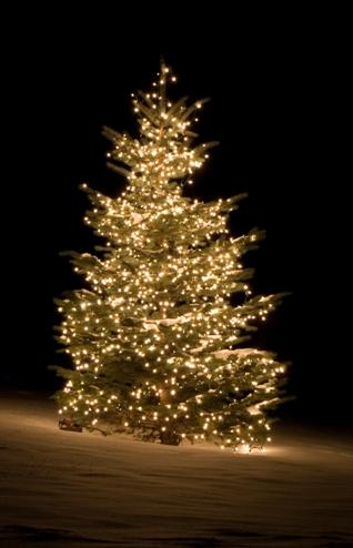 hof van eel komt graag een mooie kerstboom bij u aan de ingang plaatsen en decoreren misschien hebt u al een boom dit moet niet noodzakelijk een kerstboom